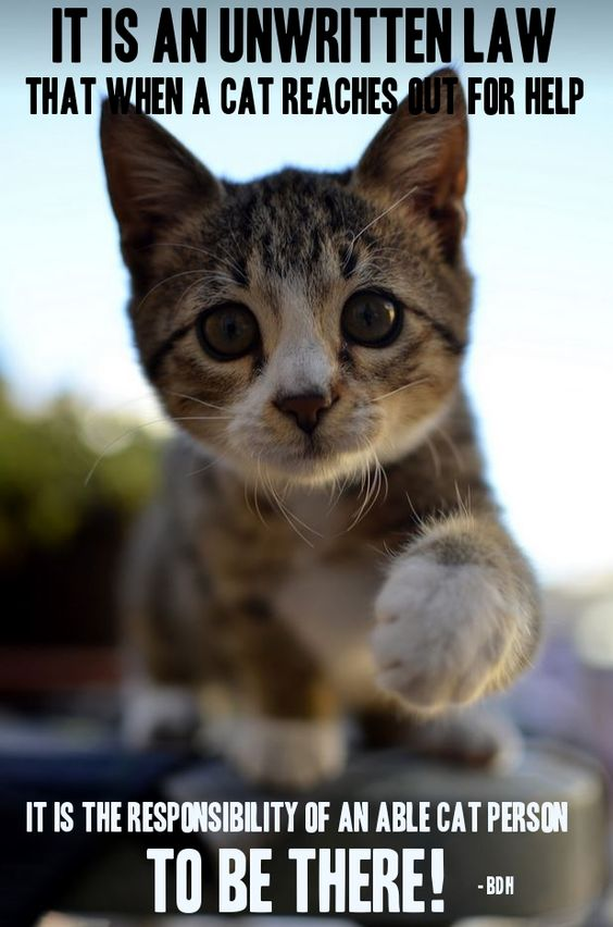 """* * KITTEH: """" Wut if der are no responsible cat purrsons around? """""""