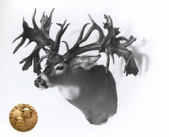 Five Biggest Bucks: Whitetails That Score Over 300 Inches | Outdoor Life