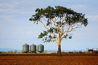 Country Scenery near Dalby, Qld.
