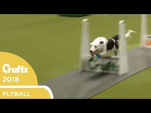 Flyball Ykc Final Crufts 2018 Youtube Finals Semi Final
