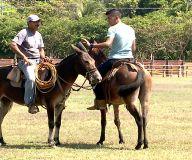 Disfrute de la fiesta nacional de las mulas esta semana