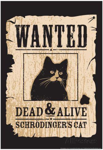 Schrodinger's Cat Affiche