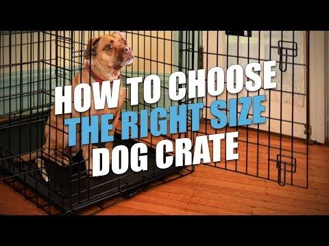 Before You Try Crate Training A Dog Read This 10 Important Things I Ve Learned About Crate Training Dogs How To Crate Training Dog Dog Crate Crate Training
