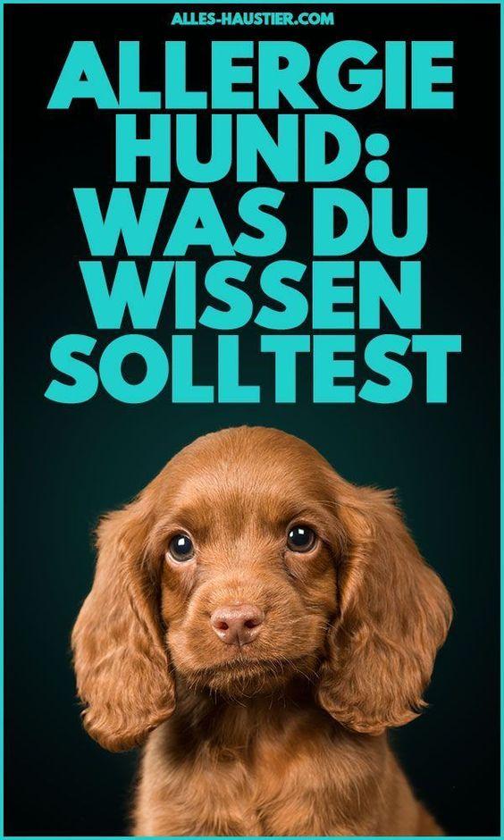 Allergie Beim Hund Symptome Und Was Man Tun Kann In 2020 Hundeverhalten Hund Bellt Hunde