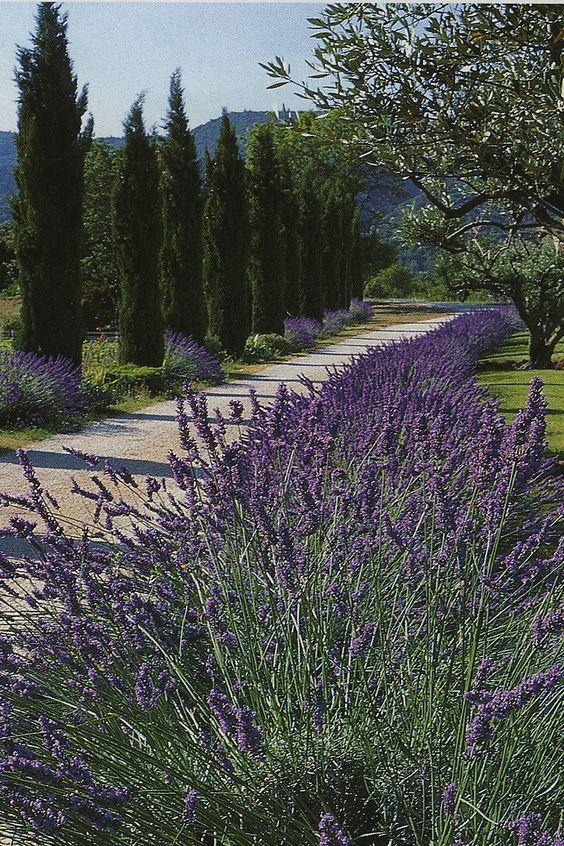 Parfums de lavande sous le soleil de la Provence.