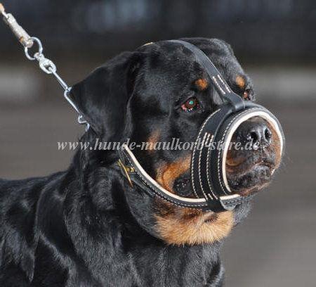 Rottweiler Hund Maulkorb ist gepolstert