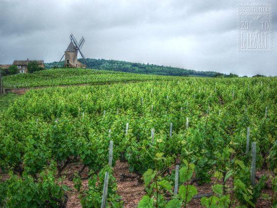 Situé à la limite du Rhône-Alpes et de la Bourgogne. Romanèche-Thorins fait partie du Beaujolais, du Vignoble du Mâconnais et rendre dans la célèbre route du vin. En savoir plus sur http://www.sejour-touristique.com/vacances-en-france/decouverte-de-nos-regions/bourgogne/saone-et-loire/romaneche-thorins.html#johYyzOwQTb4kFcc.99
