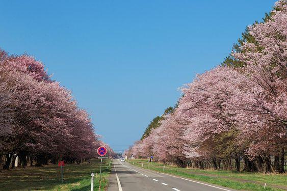 二十間道路桜並木 - 十勝/日高の絶景