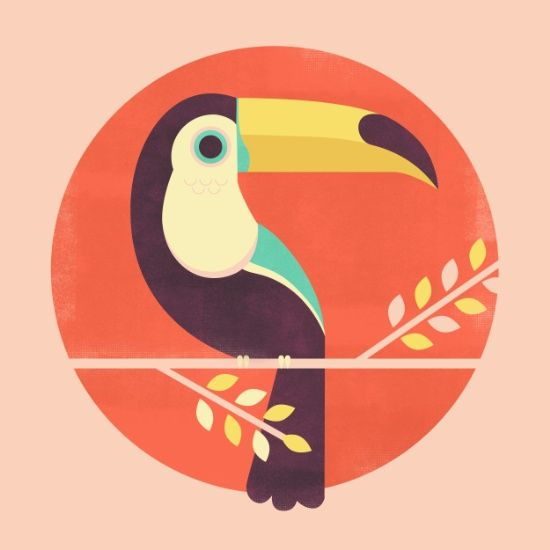 Toucan bird wall art. Toucan by Jay Fleck