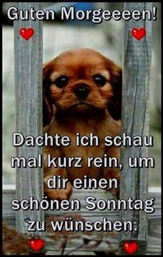 Whatsapp Schonen Sonntag Bilder Kostenlos Bilder Und Spruche Fur