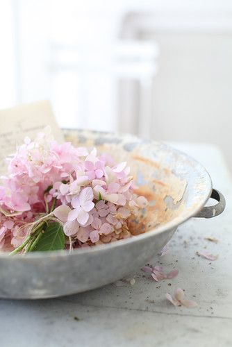 ~: Photography Flowers Plants, Shabby Chic, Sweet Pink, Pretty Pastel, Beautiful Flowers, Pink Hydrangea, Hydrangea