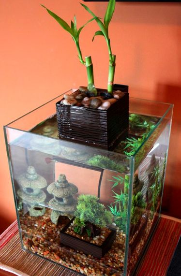 zen aquarium i got this aquarium for my husband for our. Black Bedroom Furniture Sets. Home Design Ideas