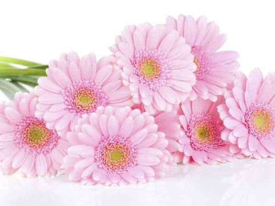 How to wire your gerbera arrangement | homeheaven: