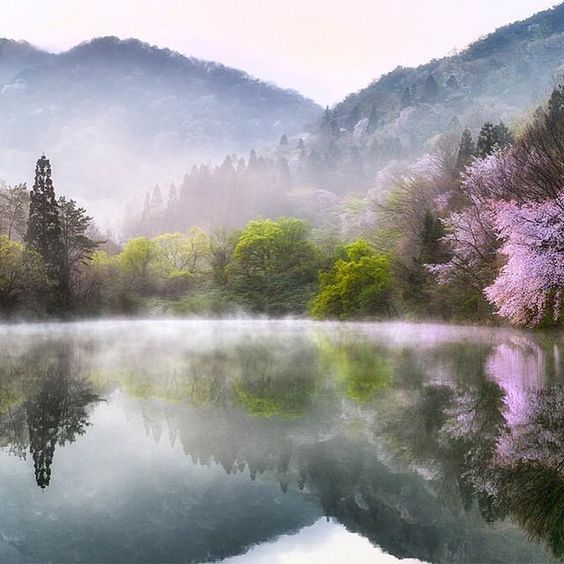 Spring in South Korea | Photography by Kim Suk Eun