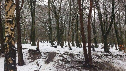Storeton Woods March 2013