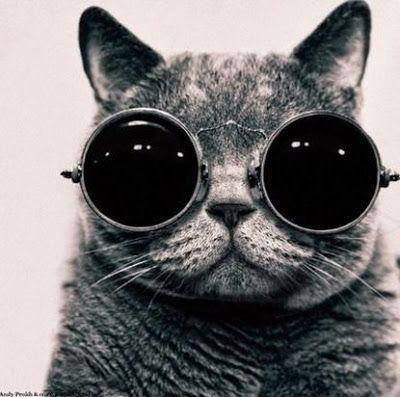 Imagenes para los amantes de los gatos. | Quiero más diseño