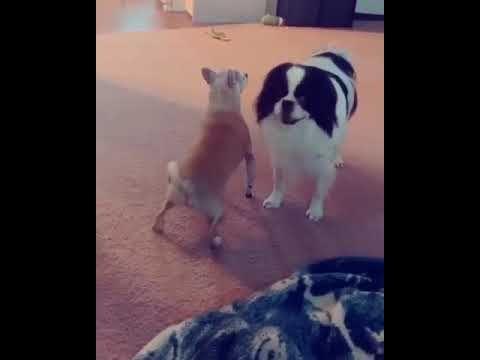 Un Perro Perreando Con Purple Noise De Fondo Youtube Memes Animals Youtube