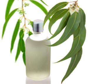 Cómo hacer aceite de eucalipto