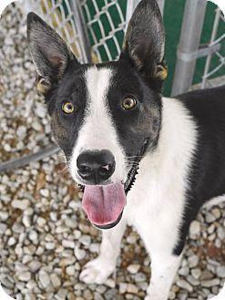 URGENT! Athens, AL - Border Collie. Meet Donald, a dog for adoption. Athens-Limestone Animal Shelter Pet ID #: 10444496-2016-777K Phone: (256) 771-7889 E-mail: thedogpound7889@yahoo.com Address: 1701 Hwy 72 East Athens, AL 35611 http://www.adoptapet.com/pet/16397592-athens-alabama-border-collie