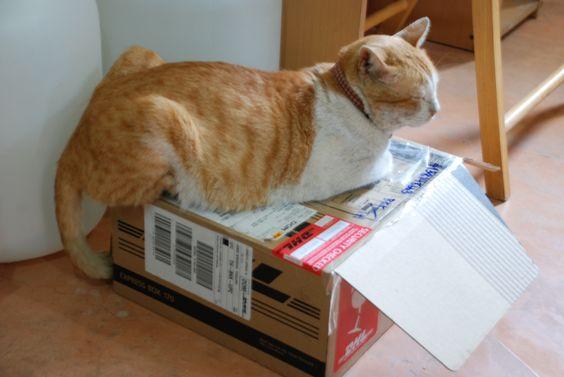 me box #Sabio