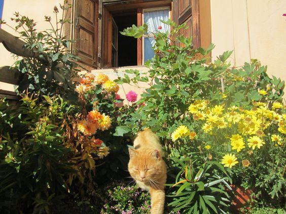 rode kat in Guarda