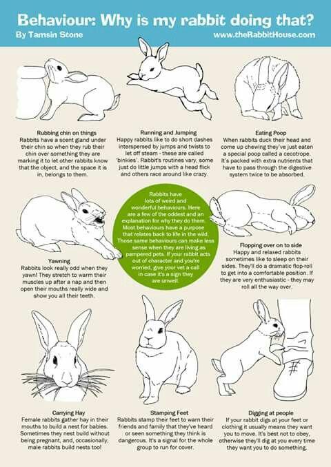 Pin By Hamza On Bunny Pet Bunny Rabbits Pet Rabbit Care Bunny Care