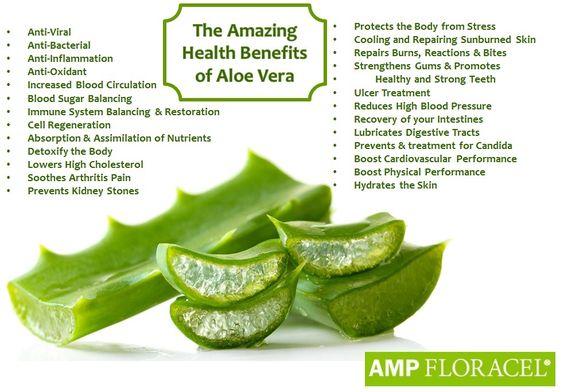 The amazing health benefits of Aloe Vera #ampfloracel #powerful #natural #health #organic #aloe #aloevera #diseases #disorders