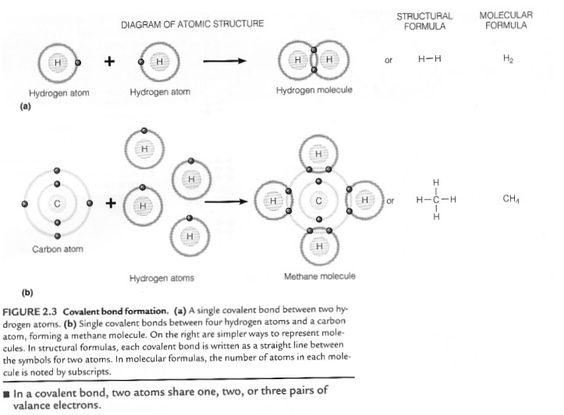 Covalent Bond  InspirationScience For Inspiration