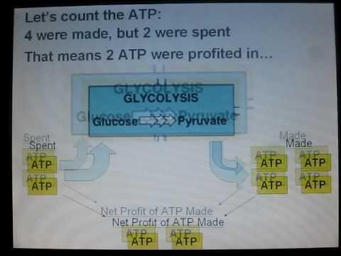 Ap biology essay cell transport