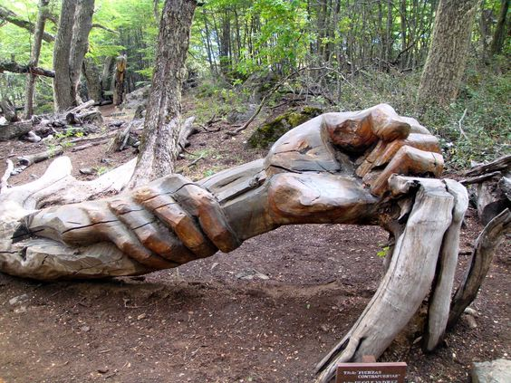 Art carved into fallen tree wood carvings
