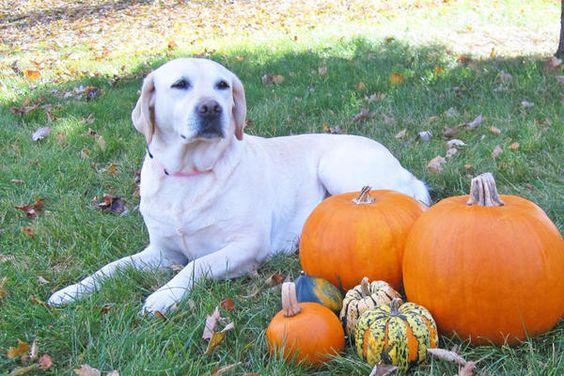 Pumpkin- Titus & Even daughter
