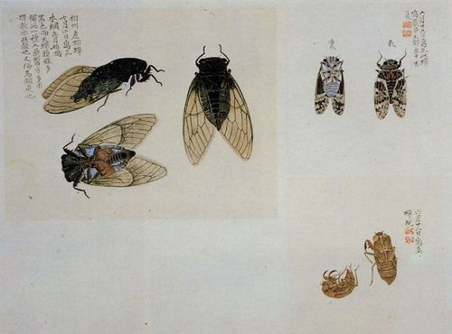 The insect quire (Summer version) by Masuyama Sessai (1754 - 1819).  Edo period (19th century).  Tokyo National Museum.  Wikimedia