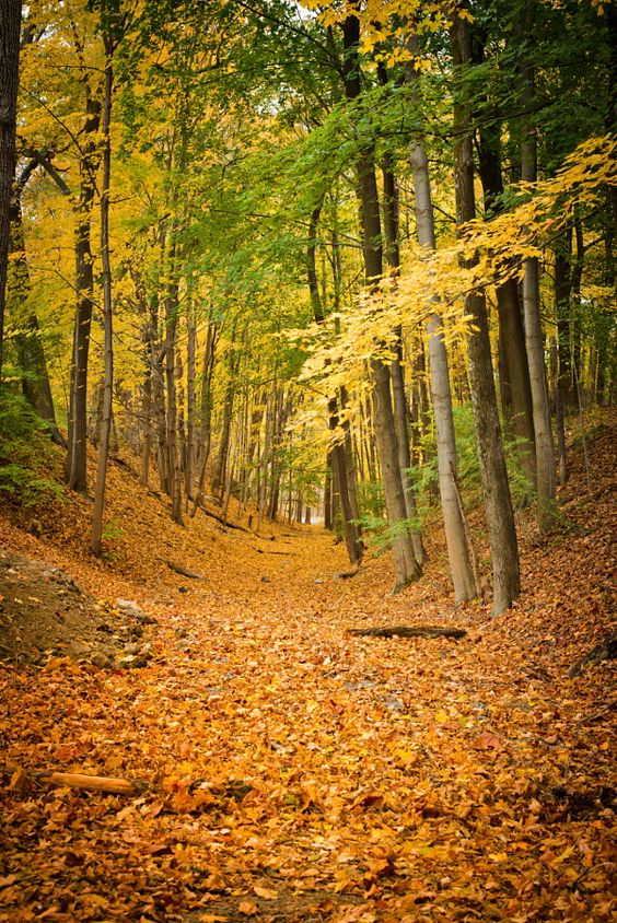 Forest Path (Taconic State Park, NY) by Sharon Chen - 500px