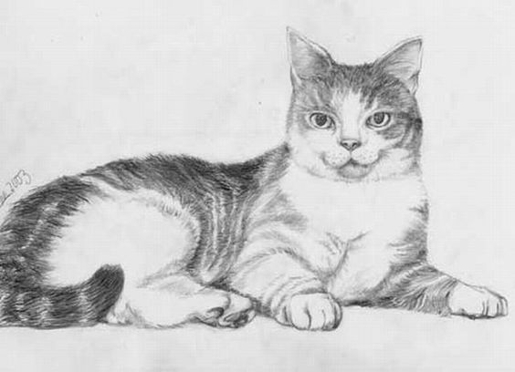Como dibujar gatos y gatitos