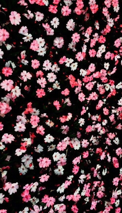 Background beautiful cool flowers homescreen pink for Wallpaper home screen tumblr