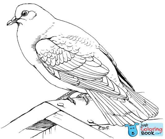 Free Printable Pigeon Coloring Pages For Kids Coloring Animals Pertaining To Rock Dove Coloring Pages