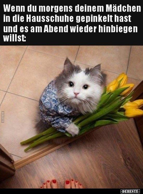 Pin Von Kevin Keegan Auf German Katze Lustig Katzen Lustige