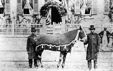 """Old Bob"" Lincoln's horse photographed in front of Lincoln home on day of Springfield Funeral. Lincoln Family friend, Rev. Brown on the left."