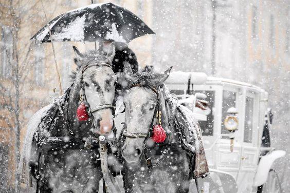 #Christmashorse #ihoofinglovehorses