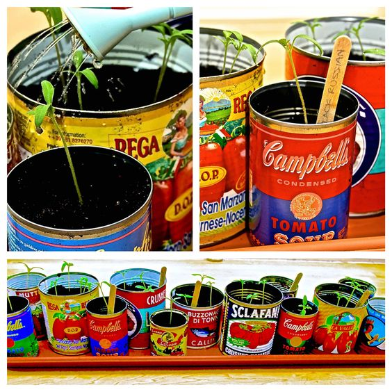 seedlings-in-tins_Collage.jpg (2800×2800)