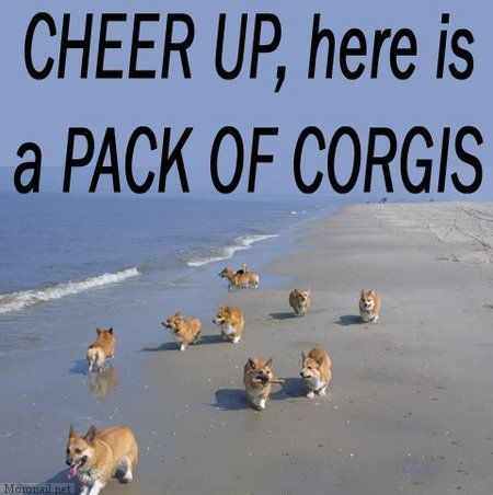 """Corgi walks into a bar and asks for a drink.  Bartender tells the corgi, """"Sure, it'll be $2.""""  Corgi says """"I'm sorry, I can't pay that.""""  Bartender asks """"What kind of corgi can't even pay for his own drink?""""  Corgi replies """"PemBROKE"""""""