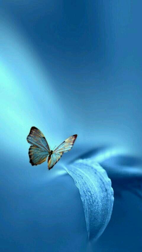 Papillons Fond D Ecran Cellulaire No 35 Clubboxingday Boxingday Boxi Rabais Circulaire S Fond D Ecran Colore Photographie De Fleurs Jolies Images
