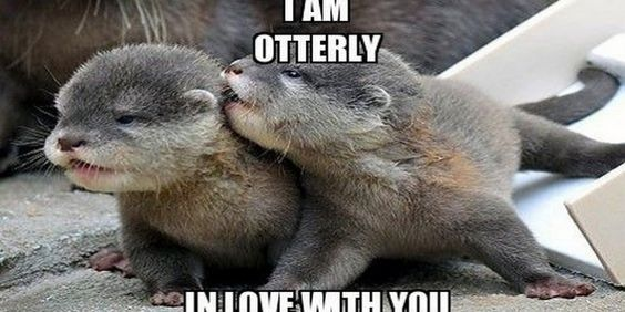 Cute Funny Love Memes images Free Download