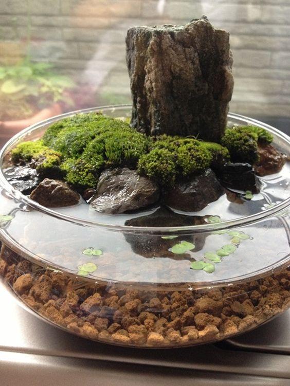 indoor water garden in a small aquarium bowl #gardenIdeas #garden #gardening #plants #homeDecor #indoor