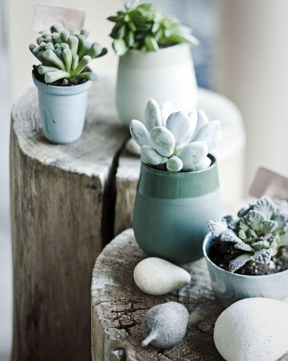 Plantes succulentes - idées d'arrangement -