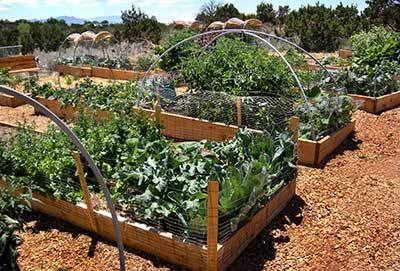 images community gardens | Eldo Community Garden RAISED_BEDS_IN_GARDEN