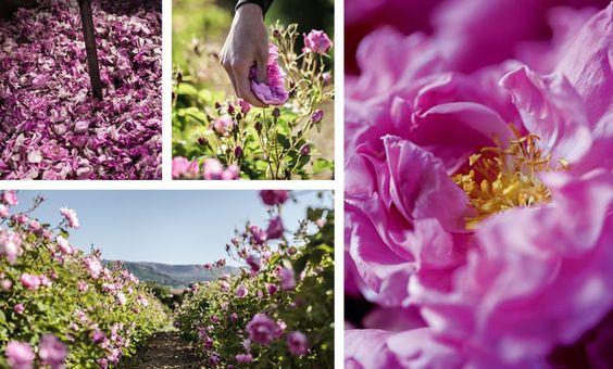 Rose de Mai de Grasse Parfums Christian Dior