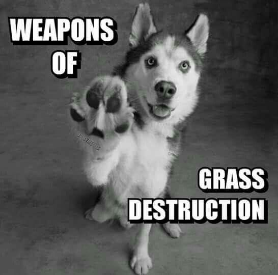 How To Keep A Dog From Digging - tame those weapons of grass destruction! Here's how: