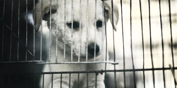 """Why I Would Always Adopt a Shelter Animal"" http://www.huffingtonpost.com/lisa-lafontaine/adopt-a-shelter-animal_b_5609875.html?ncid=fcbklnkushpmg00000063  ALWAYS ADOPT!!!!!!"