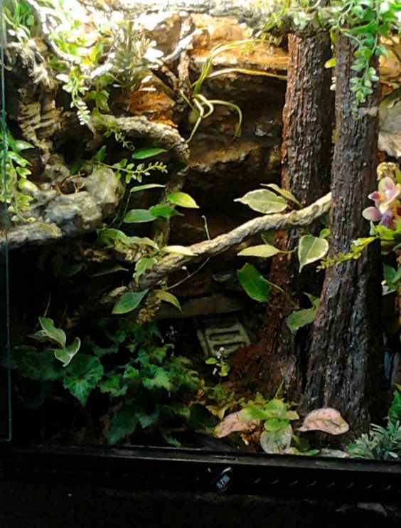 """Forest of Endor"" Star Wars vivarium build"